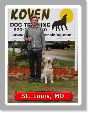 Trained Dogs For Sale St Louis Mo